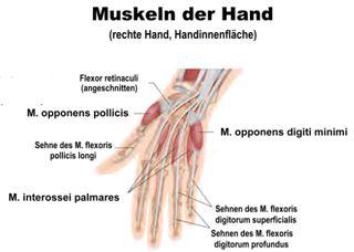 Die Wundervolle Menschliche Hand Artikel Welt Von Morgen
